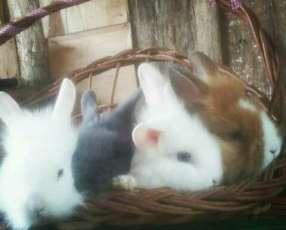 Conejos cabezas de león y enanos