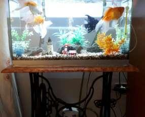 Pecera de 60 litros con todos los accesorios y peces incluidos