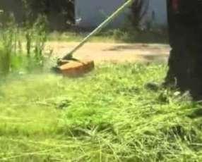 Limpieza de terrenos y patios baldíos