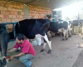 Lote de vacas lecheras
