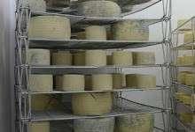 Comienza tu negocio de quesos con video clases - 8