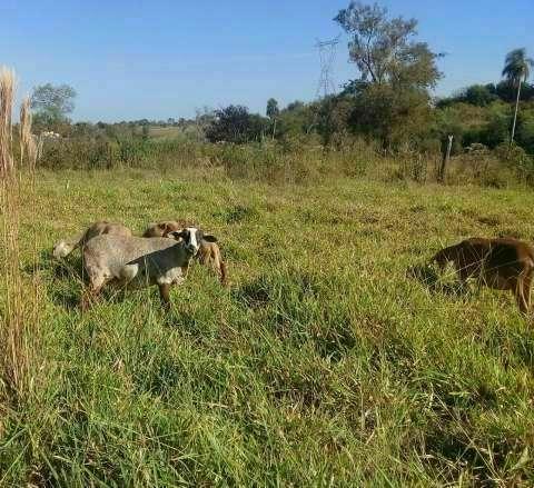 Ovejas y cabras - 3