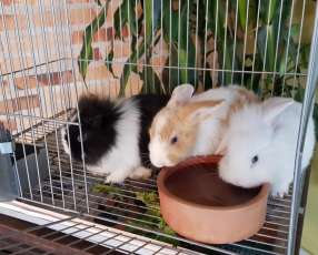 Conejos de razas pequeñas y buen carácter