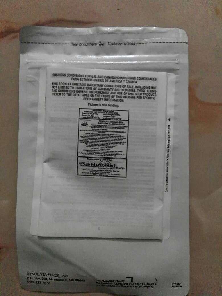 Semilla para locote sylgenta nathalie - 1