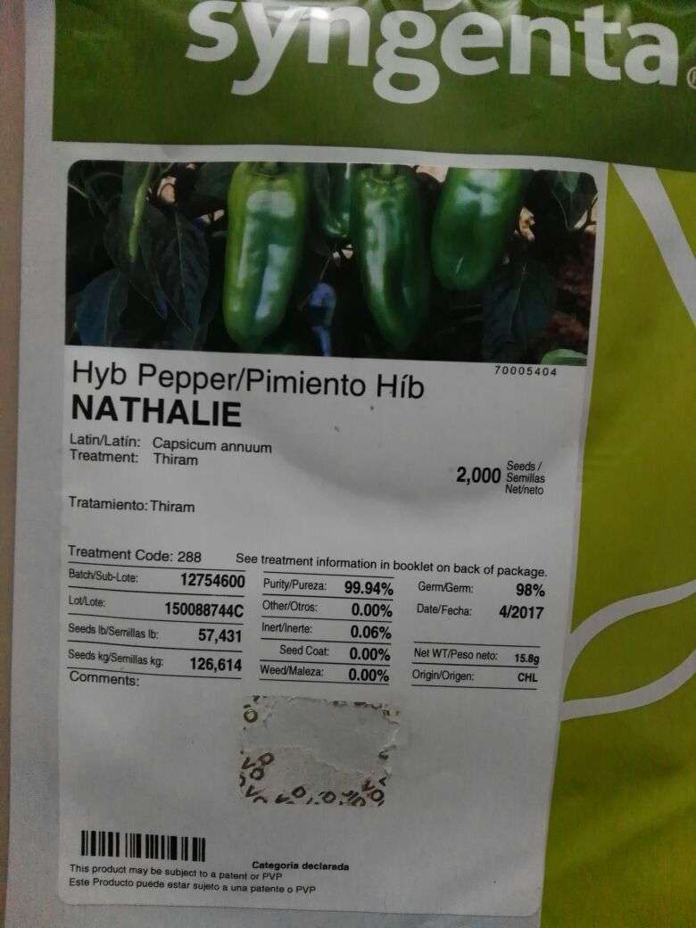 Semilla para locote sylgenta nathalie - 2