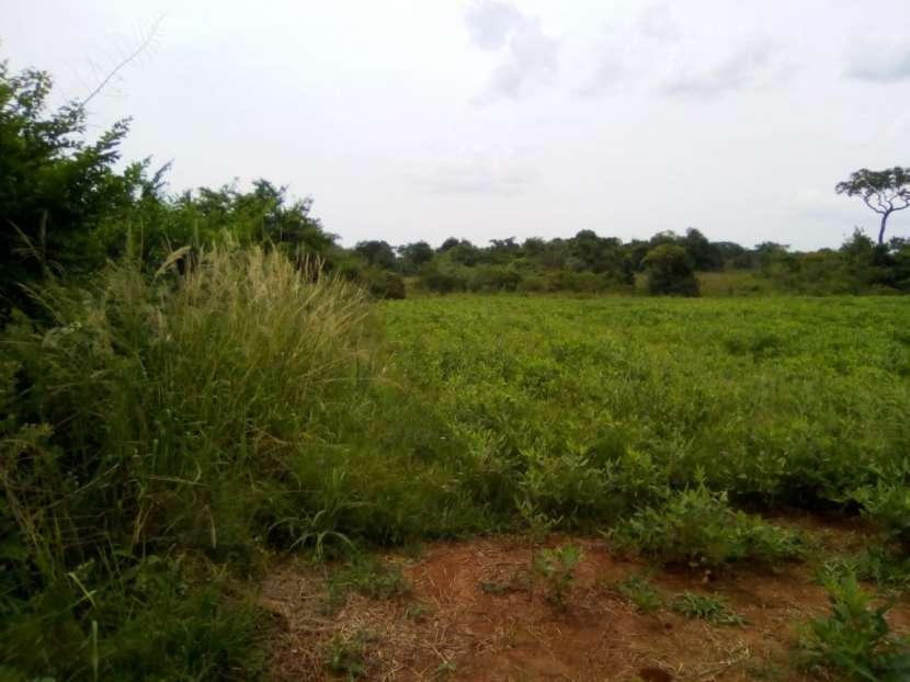 34 hectáreas en Itacuá distrito de Encarnación - 2