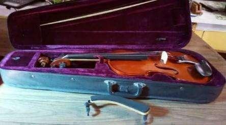 Viola Argentina - 4