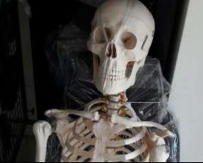 Esqueleto humano articulado