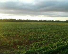 Campo de 266 hectáreas en Caaguazu