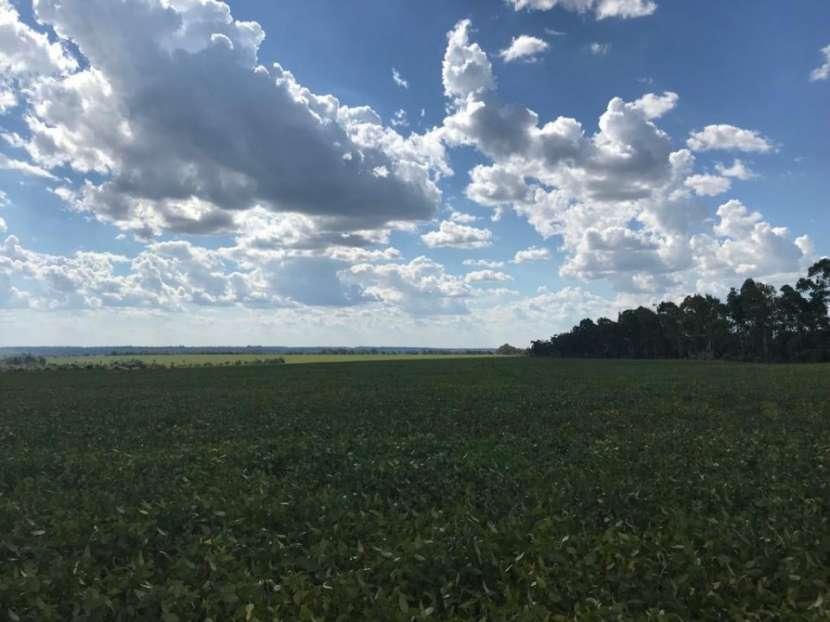 Campo 600 hectáreas en Itakyry Alto Paraná - 3