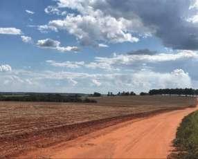 Campo 600 hectáreas en Itakyry Alto Paraná