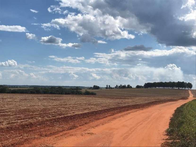 Campo 600 hectáreas en Itakyry Alto Paraná - 0