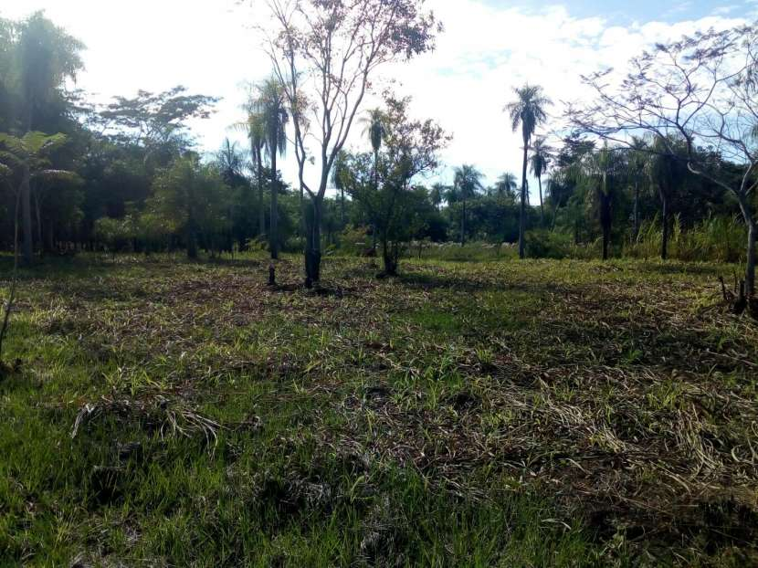 Terrenos en Areguá detrás de Gobernación de Central - 4