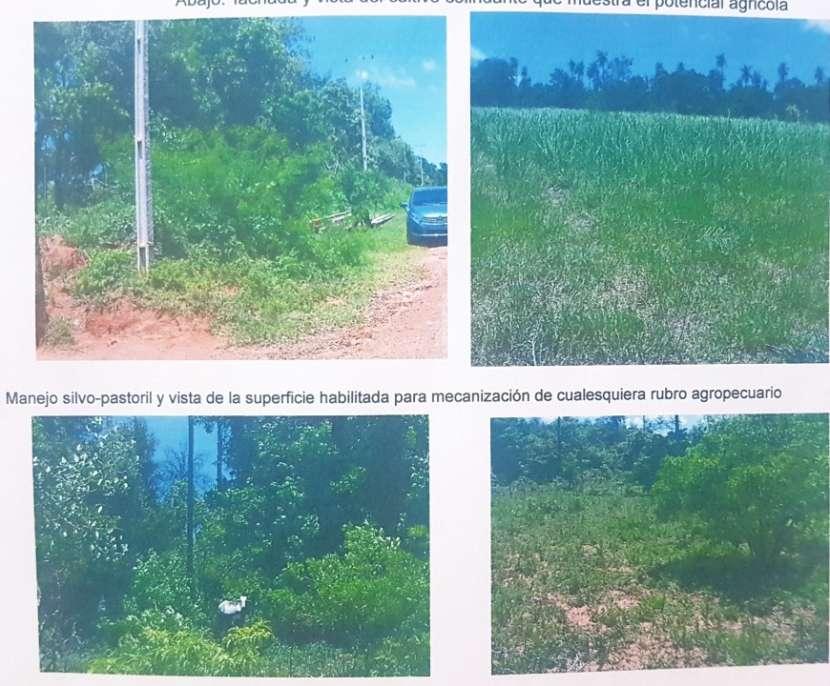 Terreno de 9,5 hectáreas zona Chololo - 0