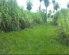 Campo en General Artigas Itapúa