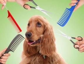 Cortes Caninos Veterinarias
