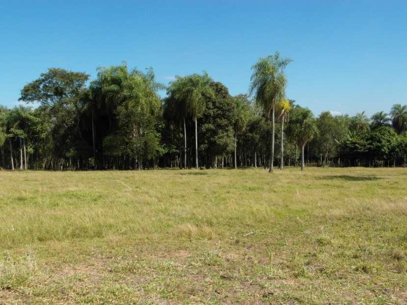Terreno de 12 hectáreas - 2