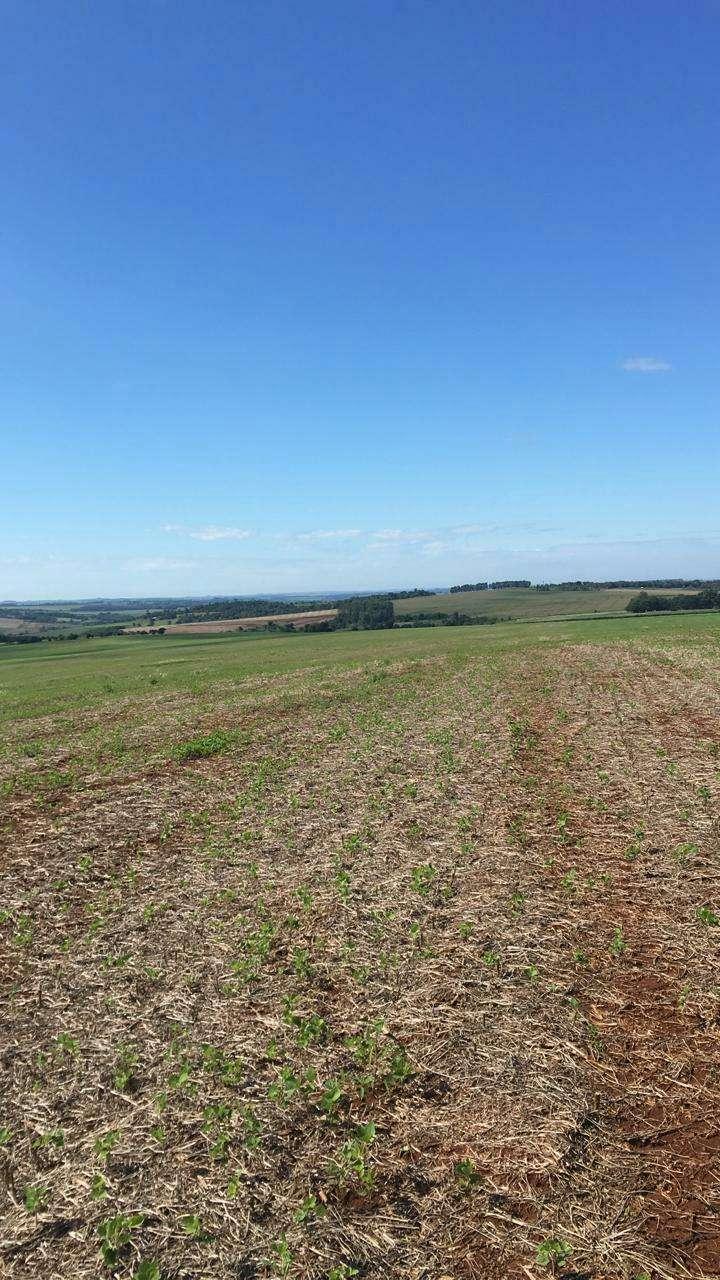 Terreno de 239 hectáreas - 1