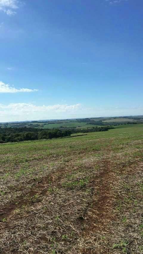 Terreno de 239 hectáreas - 0