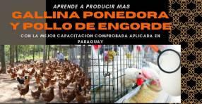 Pollos de engorde y gallinas E-Book Completo