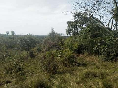 Terreno en Nueva Colombia - 8