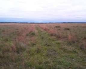 5500 hectáreas en Loma Plata