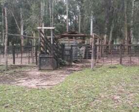 550 hectáreas eucaliptal en Itapuá