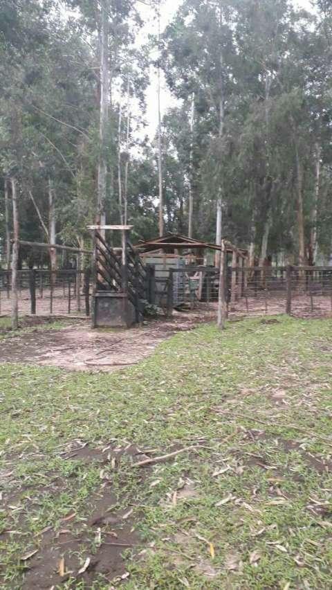 550 hectáreas eucaliptal en Itapuá - 0