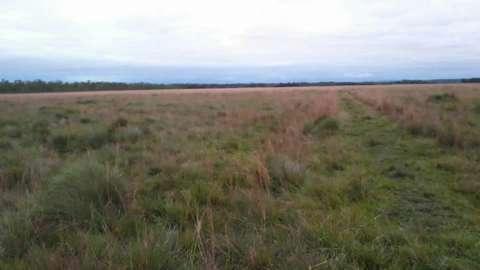 550 hectáreas eucaliptal en Itapuá - 1