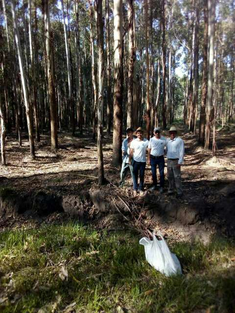 550 hectáreas eucaliptal en Itapuá - 2
