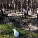 550 hectáreas eucaliptal en Itapuá - 5