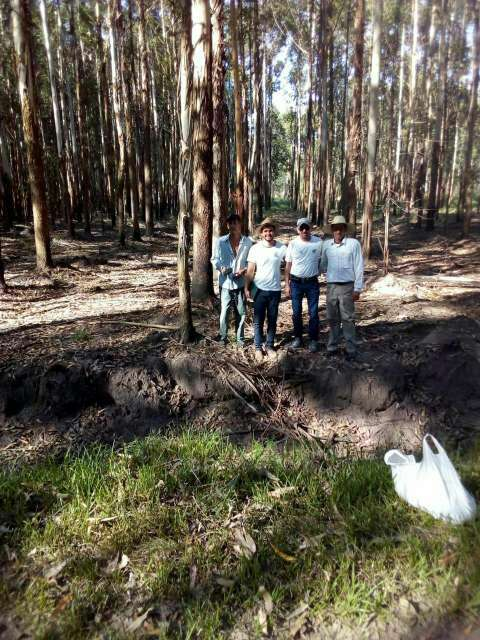 550 hectáreas eucaliptal en Itapuá - 6