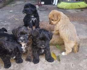 Cachorros desparasitados