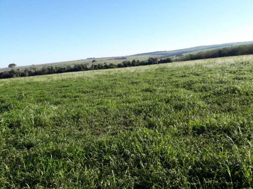 850 hectáreas Santani - 0