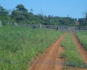 20 hectáreas de eucalytos 8000 plantas