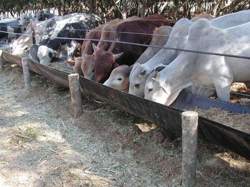 Comederos para ganado vacuno y ovino - 0