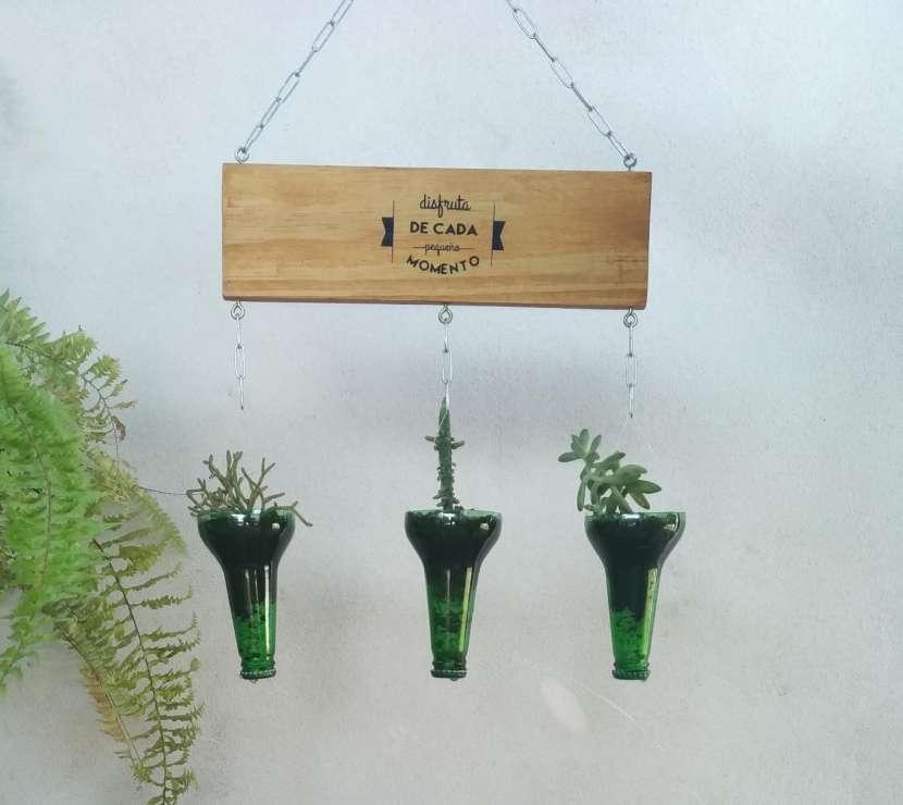 Plantera colgante - 1