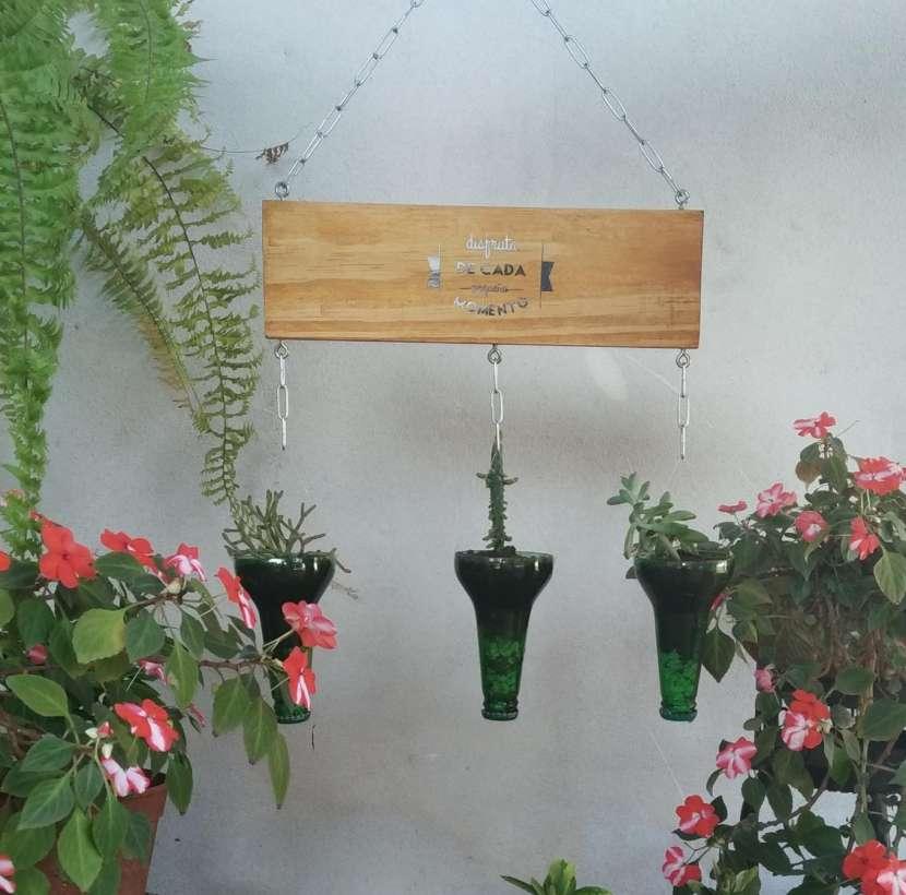 Plantera colgante - 2