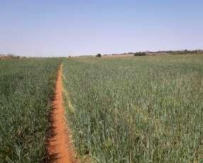 Propiedad 5 hectáreas