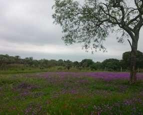 60 hectáreas en Alto Paraná