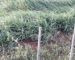 5.000 hectáreas sobre pilcomayo con desarrollo en Boquerón