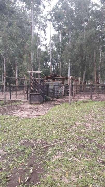 Estancia en General Díaz 8.000 hectáreas - 0