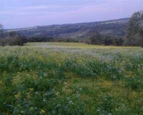 Terreno de 13 hectáreas en Edelira