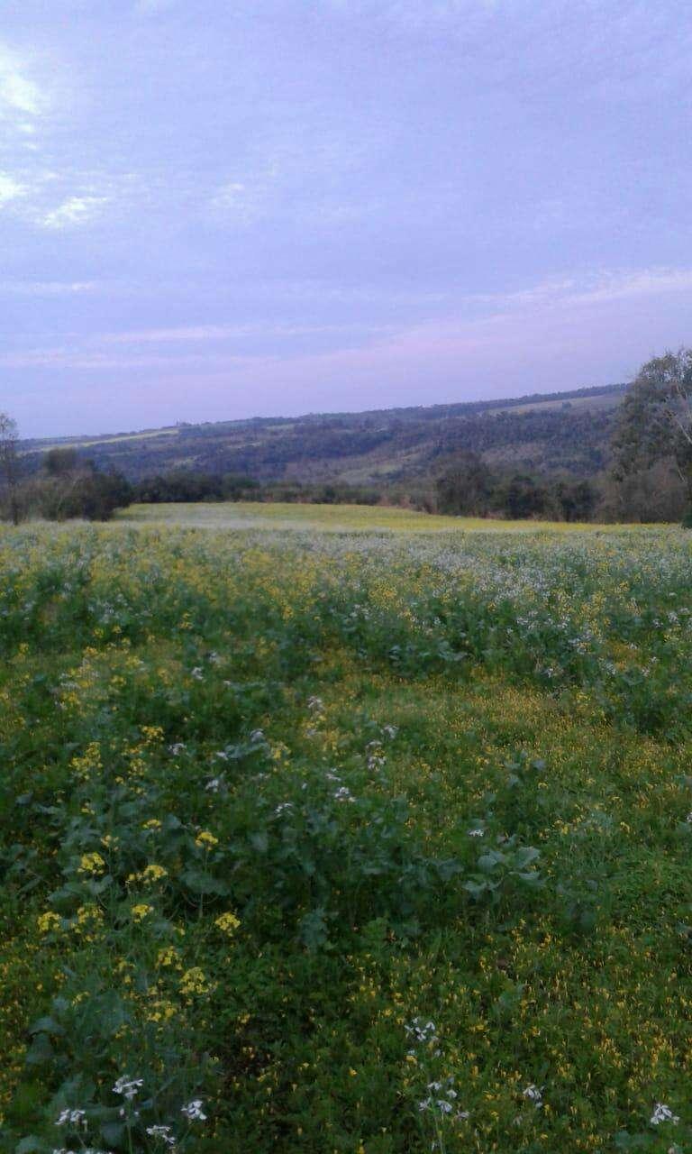 Terreno de 13 hectáreas en Edelira - 0