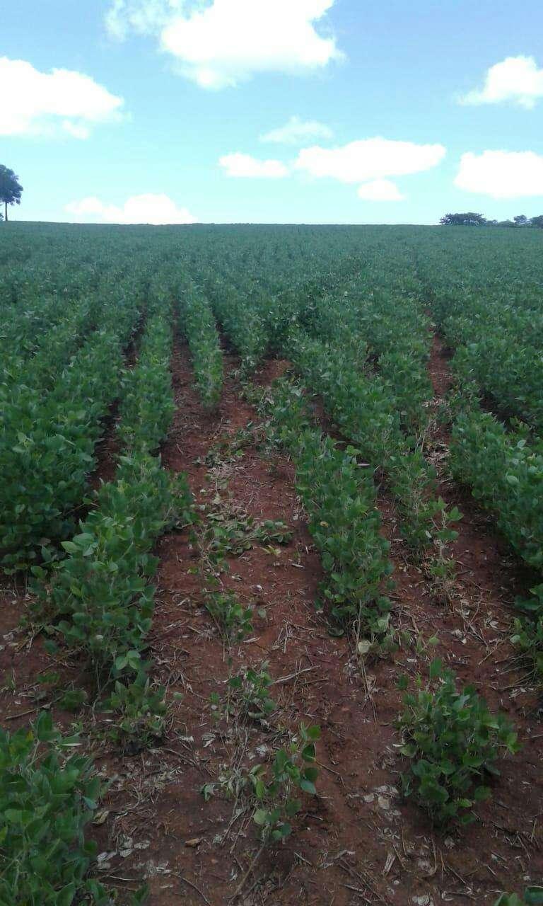 Terreno de 13 hectáreas en Edelira - 3