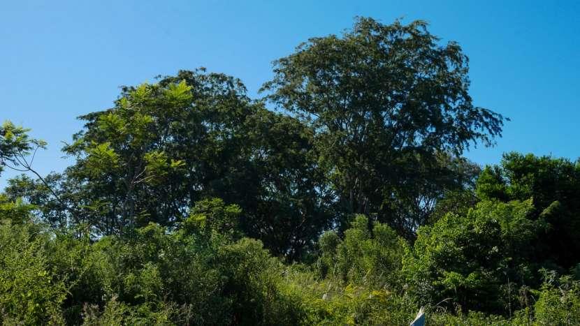Chacra de 20 hectáreas en Santaní - 7