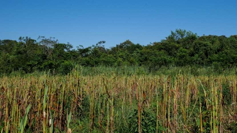 Chacra de 20 hectáreas en Santaní - 6