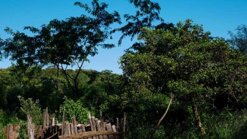 Chacra de 20 hectáreas en Santaní - 5