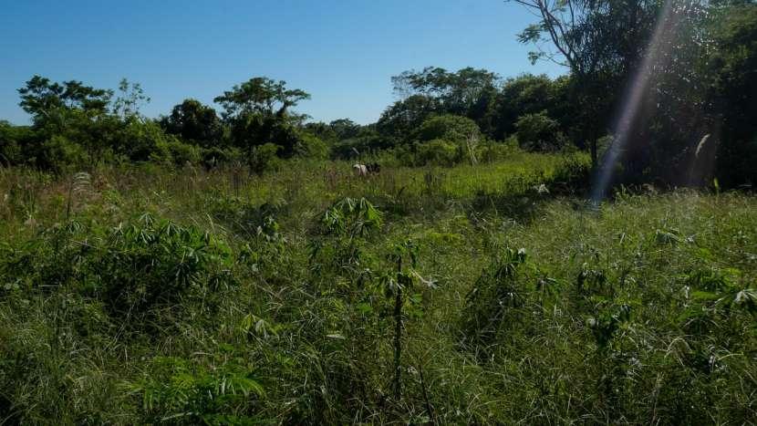 Chacra de 20 hectáreas en Santaní - 8