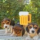 Cachorros beagle macho y hembra - 6